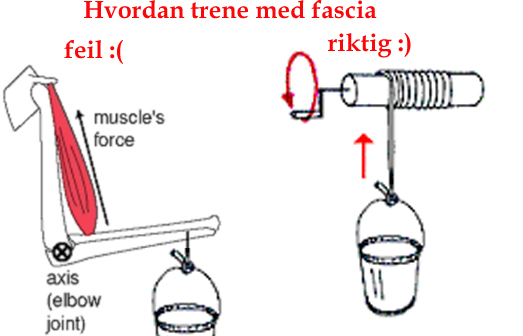 Understanding the role of fascia can make you much stronger